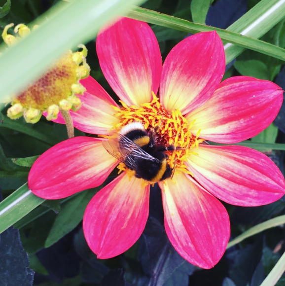 Biodiversity – what does it mean for our gardens?