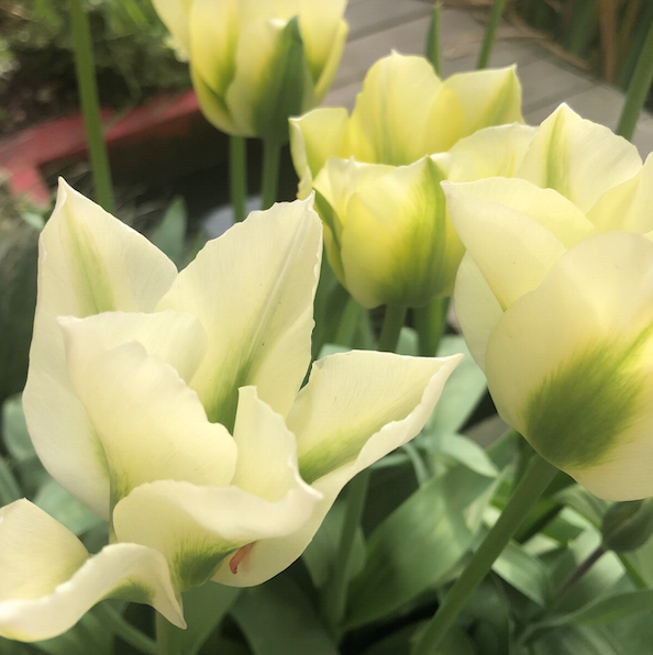 Easter in the gardenJobs to do in your garden this Spring