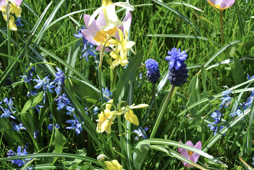It's Bulb Time!Get planting now for a splash of Spring colour!