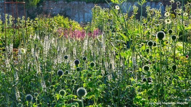 Veitch Heritage Garden